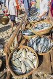 鲜鱼和金枪鱼在篮子在海滩 库存图片