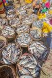 鲜鱼和金枪鱼在篮子在海滩 库存照片