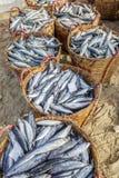 鲜鱼和金枪鱼在篮子在长的海氏鱼市上 免版税库存图片