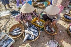 鲜鱼和金枪鱼在篮子在长的海氏鱼市上 免版税图库摄影