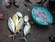 鲜鱼在地方海鲜市场上 库存照片