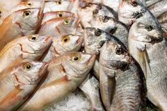 鲜鱼在市场上 库存照片