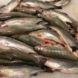 鲜鱼在市场上 库存图片