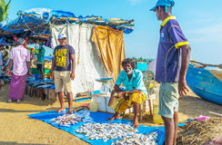 鲜鱼在市场上 图库摄影