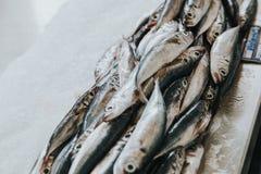 鲜鱼在市场上 免版税库存照片