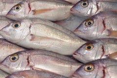 鲜鱼在柜台的甚而行在与冰 免版税库存照片