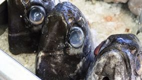 鲜鱼在鱼市上,在显示的鱼 库存照片
