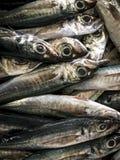 鲜鱼在Aljezur鱼市上 库存照片