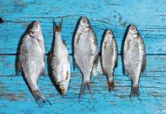 鲜鱼木背景 免版税库存图片