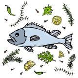 鲜鱼用草本香料和柠檬 传染媒介海鲜现实例证 图库摄影