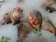 鲜鱼鲤鱼或鲤鱼,洒与冰片断  免版税图库摄影