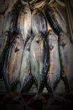 鲜鱼,能担当背景,与光的反射鱼表面上的  库存图片