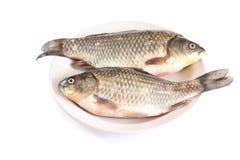 鲜鱼,鲤鱼 免版税库存照片