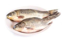 鲜鱼,鲤鱼 图库摄影