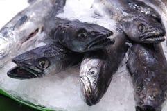 鲜鱼 库存照片