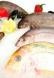 鲜鱼 免版税库存图片