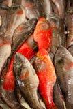 鲜鱼  免版税库存照片