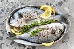 鲜鱼dorado 未加工的dorado鱼用柠檬和迷迭香 海鲷或dorada鱼 免版税库存照片