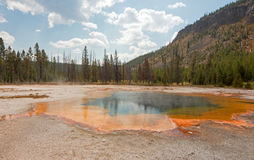 鲜绿色在黑沙子喷泉水池的水池温泉在黄石国家公园在怀俄明美国 库存照片