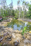 鲜绿色池 库存照片