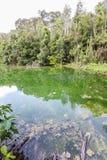 鲜绿色池 图库摄影