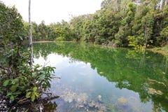 鲜绿色池 免版税库存照片