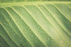 鲜绿色的叶子和水下落 免版税图库摄影