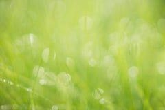 鲜绿色的夏天软的焦点背景 免版税库存照片