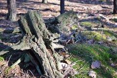 鲜绿色的森林自然走道天光 阳光林木 光的森林 深绿色本质 免版税库存照片