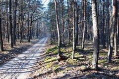 鲜绿色的森林自然走道天光 阳光林木 光的森林 深绿色本质 库存照片