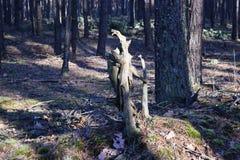 鲜绿色的森林自然走道天光 阳光林木 光的森林 深绿色本质 图库摄影