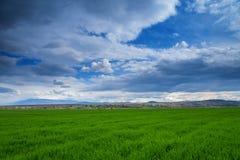 鲜绿色的领域在与云彩的天空下 库存图片