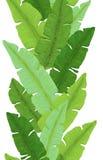 鲜绿色的香蕉叶子无缝的边界  图库摄影