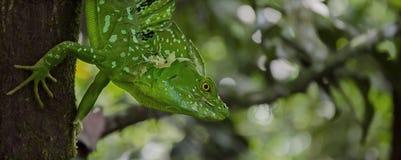 鲜绿色蛇怪流洒 库存图片