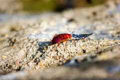 鲜绿色蟑螂黄蜂 免版税库存照片