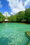 鲜绿色水池3 库存图片