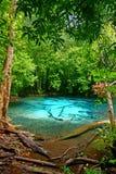 鲜绿色水池7 库存照片
