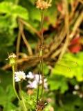 鲜绿色蜻蜓1 库存图片