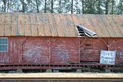 活鲤科小鱼,由火车轨道的被毁坏的议院 库存图片