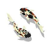 鲤鱼。Koi鱼。 免版税图库摄影