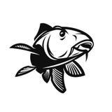 鲤鱼传染媒介例证 免版税库存照片