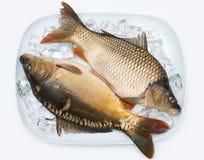 鲤鱼冰 库存照片