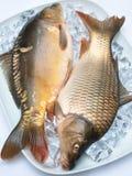 鲤鱼冰 免版税图库摄影