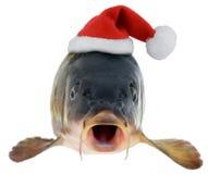 鲤鱼在圣诞老人红色帽子 免版税库存图片