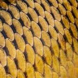 鲤鱼标度 免版税图库摄影