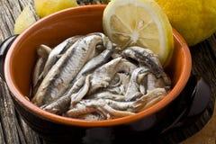 鲥鱼 免版税图库摄影