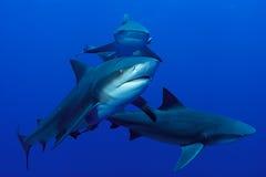 鲨鱼三翼飞机 免版税图库摄影