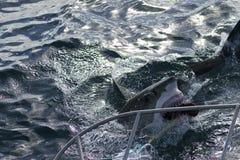 鲨鱼为诱饵,鲨鱼笼子潜水去 库存图片