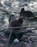 鲨鱼为诱饵,鲨鱼笼子潜水去 库存照片