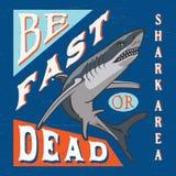 鲨鱼区域 图画 库存图片